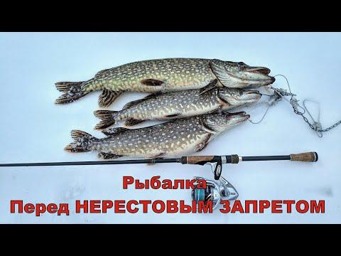 Скоро нерестовый запрет! Рыбалка на щуку!