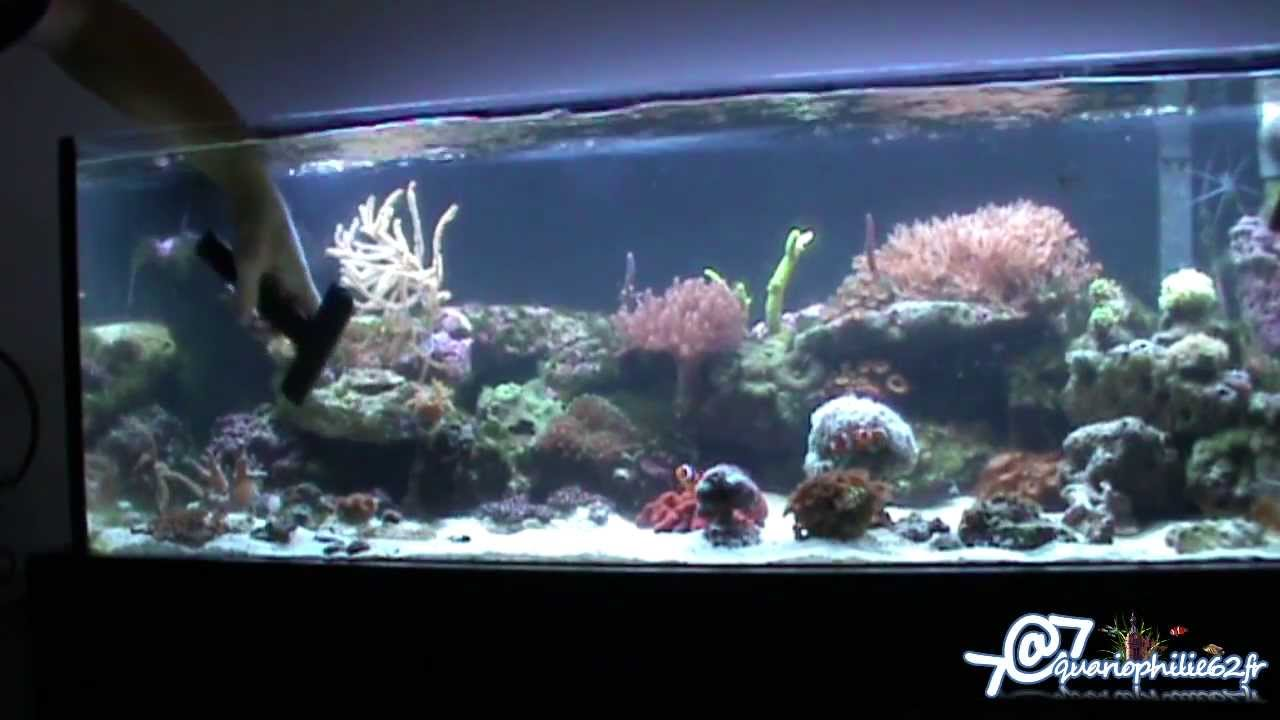 entretien nettoyage d 39 un aquarium r cifal marin ou eau de mer youtube. Black Bedroom Furniture Sets. Home Design Ideas