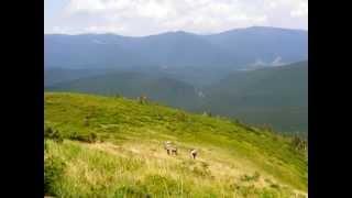 Лики природы - Карпаты