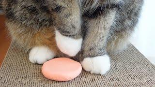 家族記念の足形とねこ。Cats's footprints for family memorial.