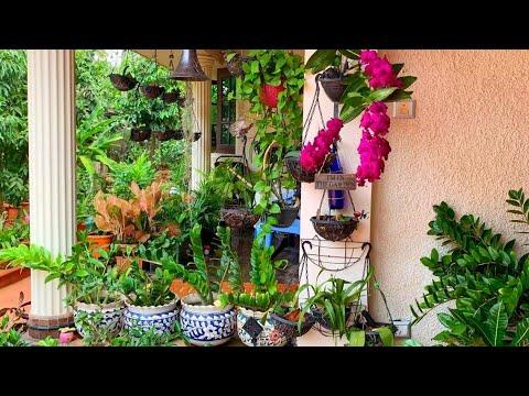 Creative And Beautiful Garden Hanging Plants Malayalam Indoor Plants Garden Ideas Salu Koshyveedu Youtube