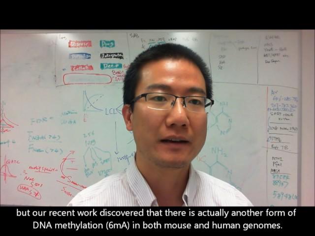Friedman Brain Institute Research Scholar Gang Fang, PhD