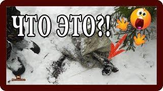 Охота на зайца. Что нашли охотники!? Выпуск 13. Сезон 2018-2019г.