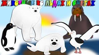 Животные во льдах и снегах. Изучение цифр. Развивающие мультики для детей