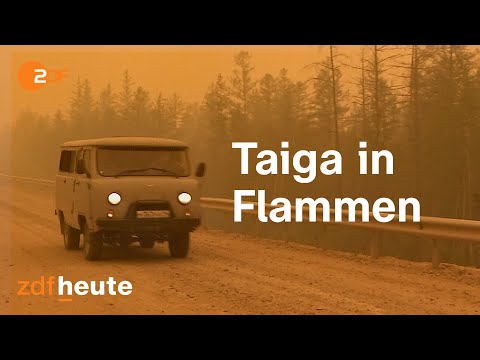 In der sibirischen Feuerhölle: Russlands Taiga brennt | auslandsjournal