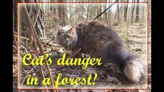 БЕЛКА И КОШКА: охота в лесу | CAT TRIES TO HUNT SQUIRREL in a Russian forest
