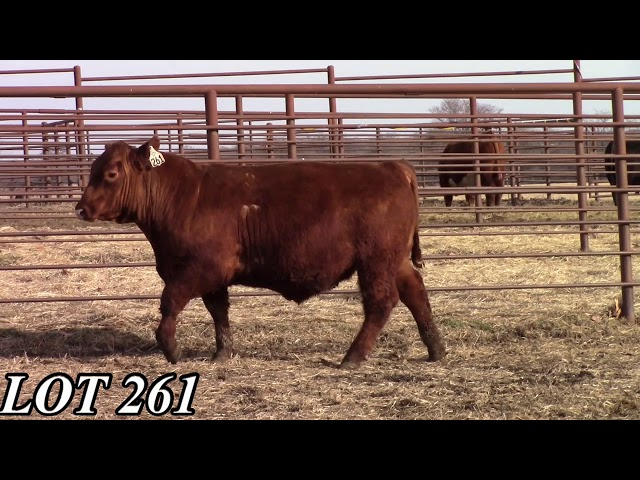 Mead Angus Farms Lot 261