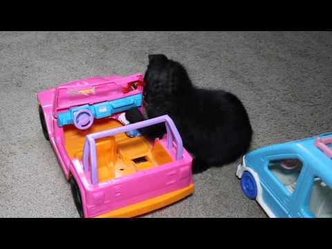 Kitten Drives Toy Car and Causes Trouble