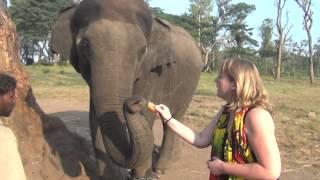 Индия. Лагерь для слонов.  Dubare Elephant Camp