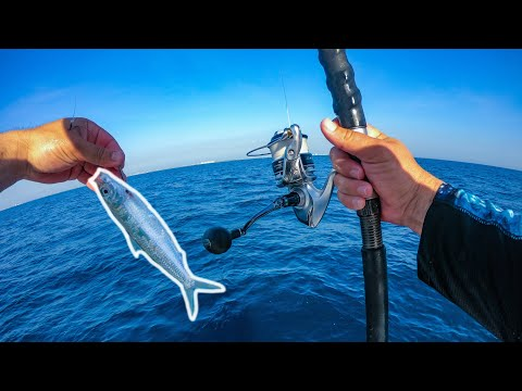 Florida Offshore Fishing With Live Sardines
