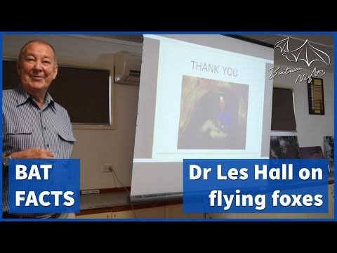 all-about-flying-foxes-with-dr-les-hall