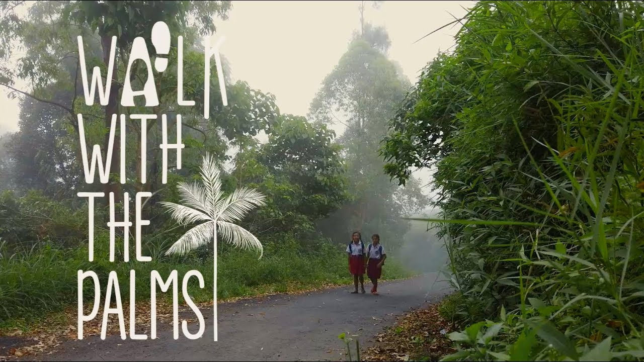 Walk with The Palms