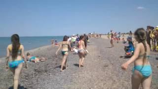 Семья лебедей пришла на пляж / Swans beach(Отдыхающие на пляже Евпатории, Крым, сняли на видео семью лебедей, которая пришла пляж., 2016-06-21T10:39:13.000Z)