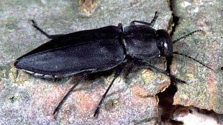 Gambar cover Jewel Beetles