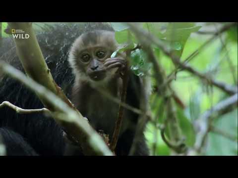 Потерянные миры Индии 2 серия - Рай Киплинга