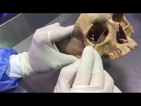 Anatomía De Las Fosas Nasales Parte 2
