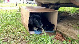 Mama dog and her newborn babies waits for help in a cardboard box under the car