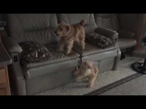 We bark together