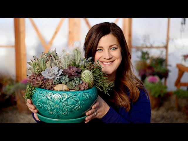 how-i-make-a-succulent-arrangement-garden-answer