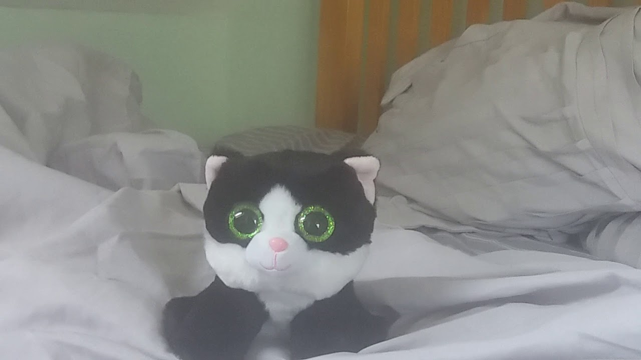 Ava The Cute Green Eyes Black And White Cat Whistle While You Work Youtube