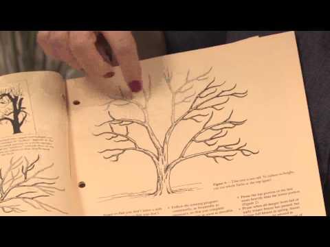 Gardening: Pruning : How to Prune Ornamental Plum Trees