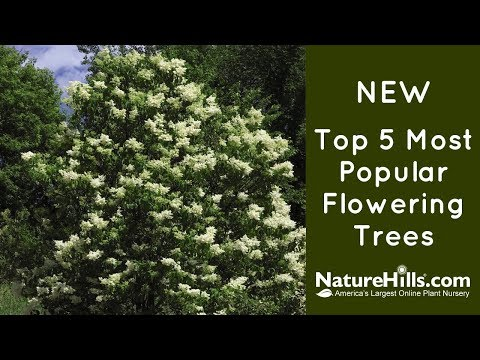 New Top 5 Most Popular Flowering Trees | NatureHills.com