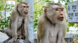 Very pity female monkey abandoned from her owner - She cries very deeply sad