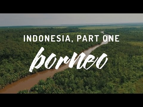 Indonesia, Part One - Tanjung Puting, Borneo
