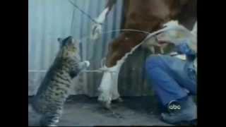 Прикольные коты и другие звери и птицы