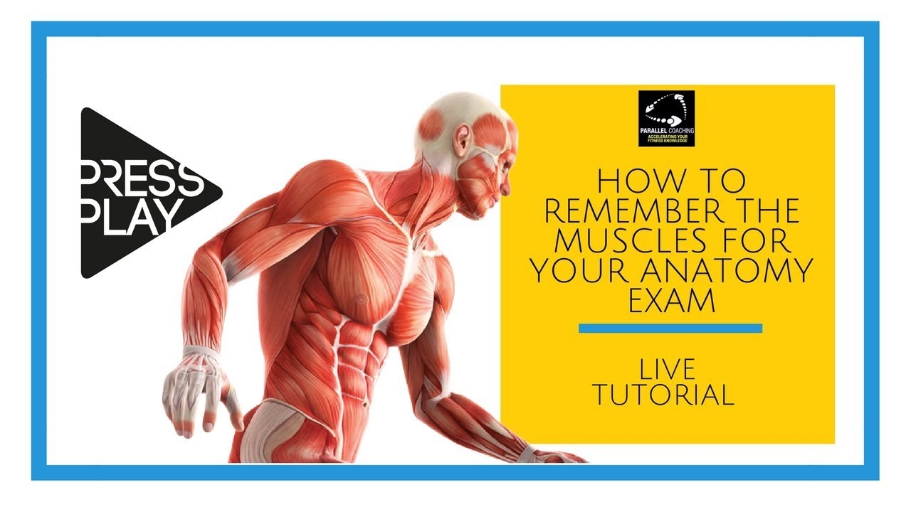 How to Remember the Muscles for Your Anatomy Exam - YouTube