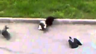 Cмешно. Животные смешные. Кошка в состоянии войны. Epic Cat Fight cat's horror).