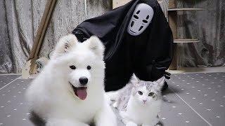 Mascara vs Mascotas