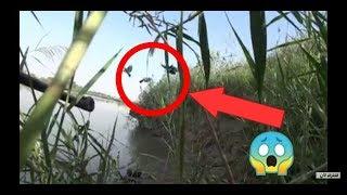 طيور قريبة جدا يتم تصويرهم فقط