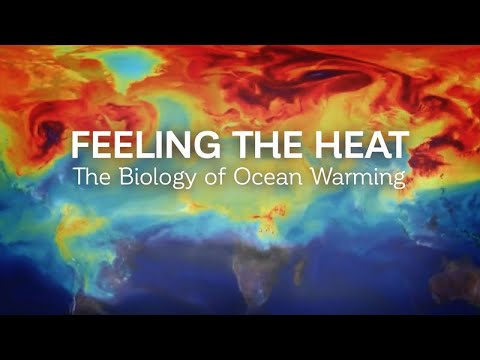 Feeling the Heat: The Biology of Ocean Warming