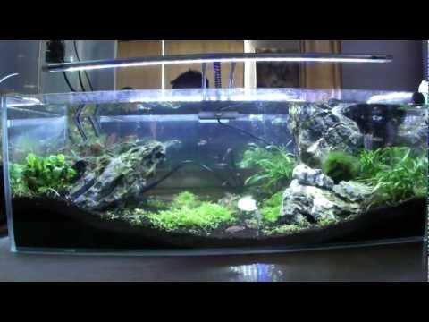 Our 6 Gallon Desktop Nano Amano Fish Tank Aquarium