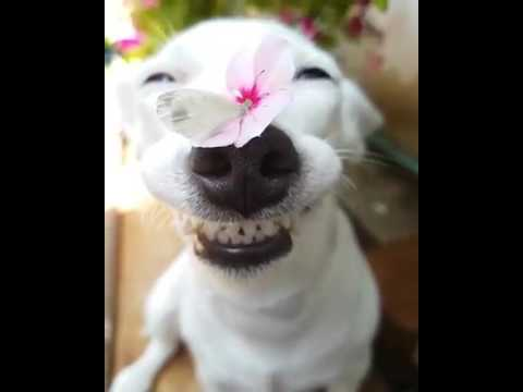 The World's Funniest cute Dog ||The Happiest Dog ...