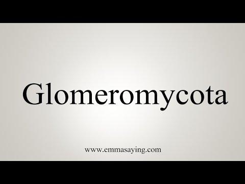 How To Pronounce Glomeromycota