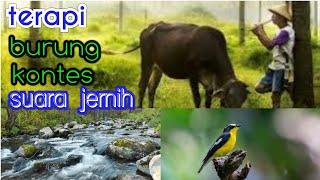 Download Mp3 Terapi Kecapi Suling Gemericik Air Dan Kicauan Burung Cocok Untuk Terapi Burung