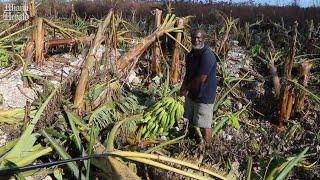 A Bahamian banana farmer's business destroyed by Hurricane Dorian