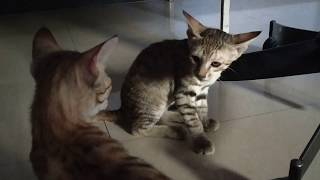 Two Kittens Fighting Badly By My Collection