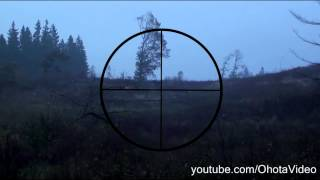 Охота на лося видео онлайн 2012-2013 Moose hunting Russia.