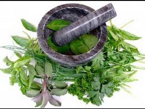 DANIEL FAST: BIBLE CURES & HEALING PLANTS