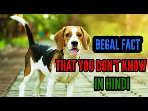 BEGAL DOG FACT || DOG FACT || IN HINDI