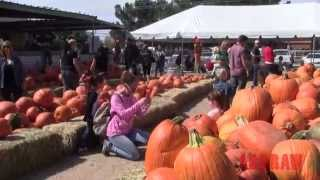 Wagner Farms 2nd Annual Apple & Pumpkin Festival in Corrales, New Mexico  - ABQ RAW