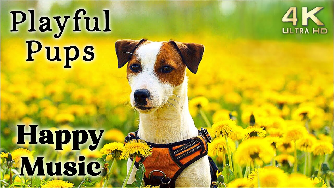 Cute 4K Dogs and Puppies TV Background, Happy Upbeat Ambient Instrumental Music