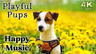 Cute 4K Dogs and Puppy Mood Booster TV Background, Happy Ambient Music  Upbeat Instrumental
