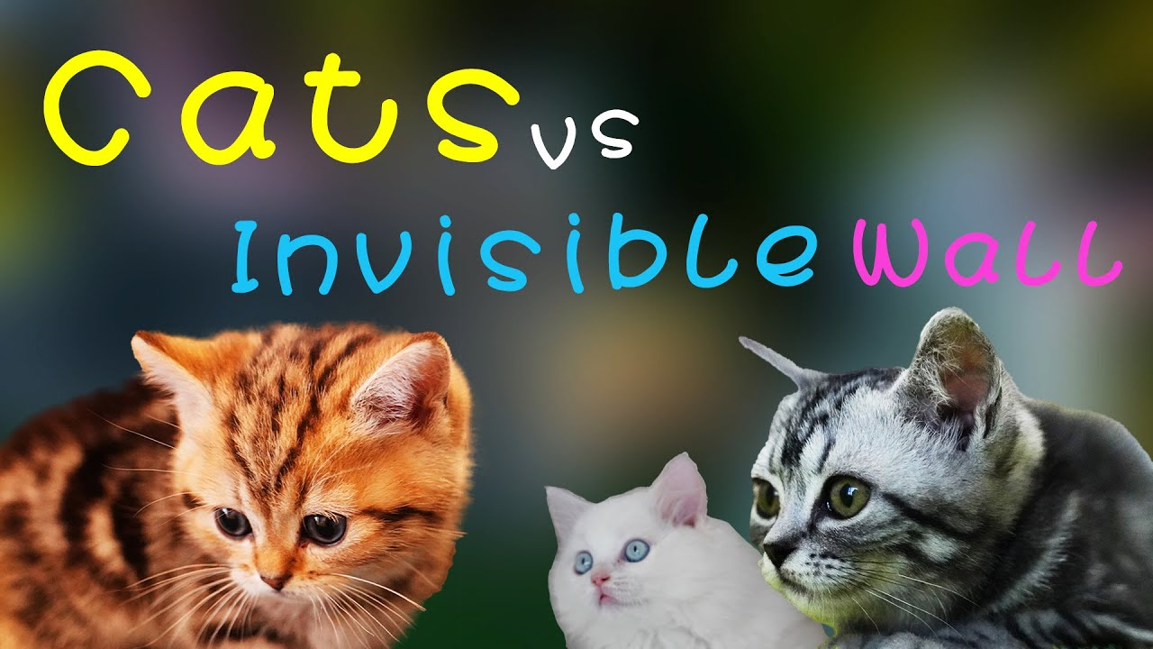 Cats vs Invisible Wall | cats vs invisible wall reaction