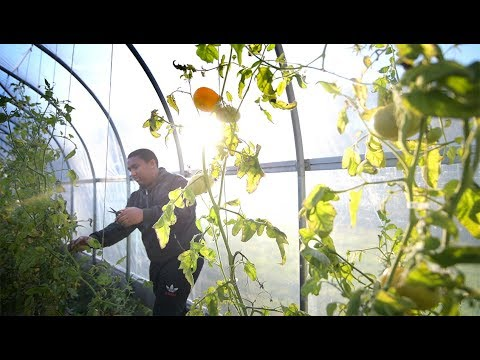 UConn Extension is Growing Food and Health with the Mashantucket Pequot Tribal Nation thumbnail