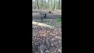 Sticks And Stones-My Dogs XxXx :-)