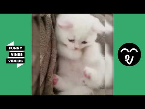 Funny Cat & Dog Vines compilation 2019 #1 |  Cute Dogs and Cats Doing Funny Things ❤️